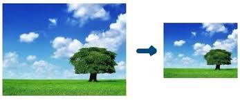 дерево и небо