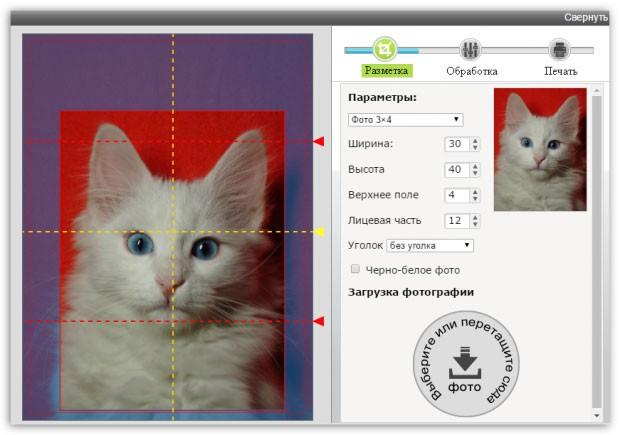 редактирование снимка белого кота